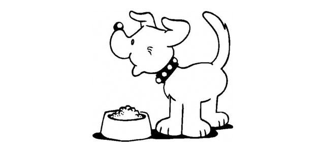 La nourriture de votre chien
