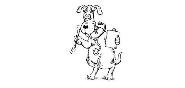 La vaccinations de votre chien
