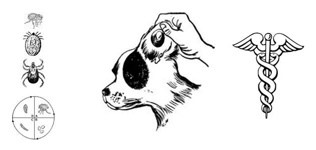 Les parasites du chien