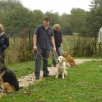 education-canine-charny_cours-collectifs-03