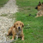 education-canine-charny_cours-collectifs-04