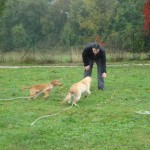 education-canine-charny_cours-collectifs-06