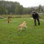 education-canine-charny_cours-collectifs-08