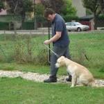 education-canine-charny_golden-retriever-happy-02