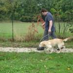 education-canine-charny_golden-retriever-happy-06
