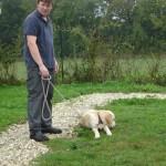 education-canine-charny_golden-retriever-happy-07