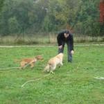 education-canine-charny_golden-retriever-happy-11