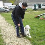 education-canine-charny_hermes-dalmatien-05