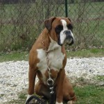 charny-education_education-boxer_05