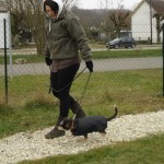 charny-education_education-pinscher-01