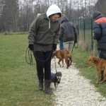 charny-education_education-pinscher-04