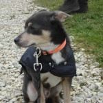 charny-education_education-pinscher-06
