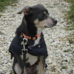 charny-education_education-pinscher-07