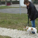 charny-education_education-jack-russell-01