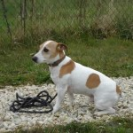 charny-education_education-jack-russell-04
