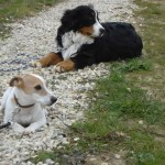 charny-education_education-jack-russell-07