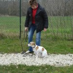 charny-education_education-jack-russell-08