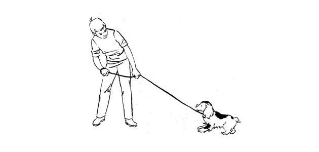 Evaluation de votre chien ou de votre chiot