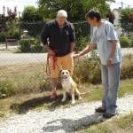 tyson-american-stafforshire-terrier-01