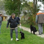 Jeune caniche nain male noir